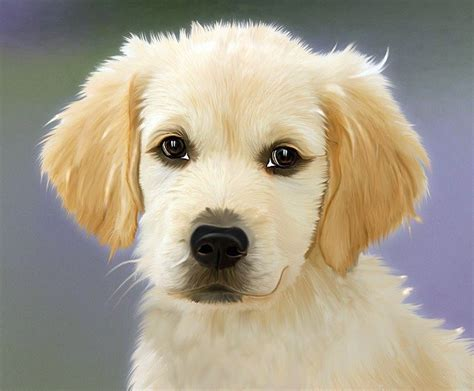 painting dog golden retriver  photo  pixabay