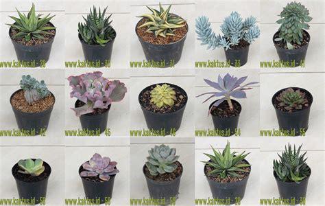 jual kaktus sukulen tersedia ratusan jenis pilihan tanaman