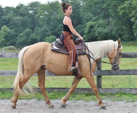 quarter horses pennsylvania smfhorses