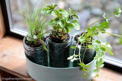 Window Sill Herb Garden Pots by Diy Windowsill Herb Garden Simple Garden Gift Frugal