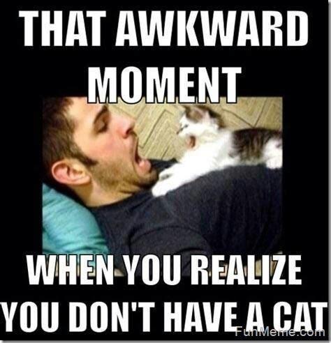 Awkward Cat Meme - that awkward moment cat meme cat planet cat planet
