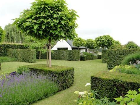 Kugel-trompetenbaum Catalpa Bignoides Nana