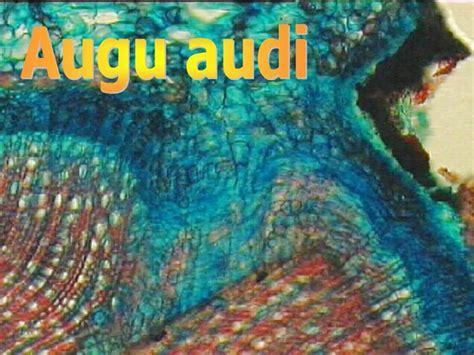 PPT - Augu audi PowerPoint Presentation, free download ...