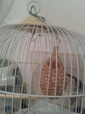 Gabbia Trappola Per Cardellini Gabbia Trappola Per Uccelli Cardellini Canarini Posot Class