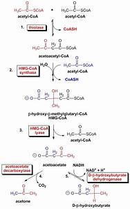 Pin By Ahirtejas On Organic Covalent Bond