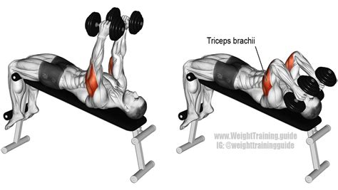 Decline Bench Grip Triceps Press by Decline Dumbbell Triceps Extension Guide And