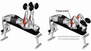 Decline Dumbbell Triceps Extension Guide And Video