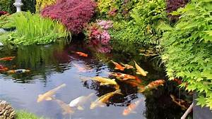 Fontaine Pour Bassin A Poisson : bassin de jardin quels poissons choisir c t maison ~ Voncanada.com Idées de Décoration