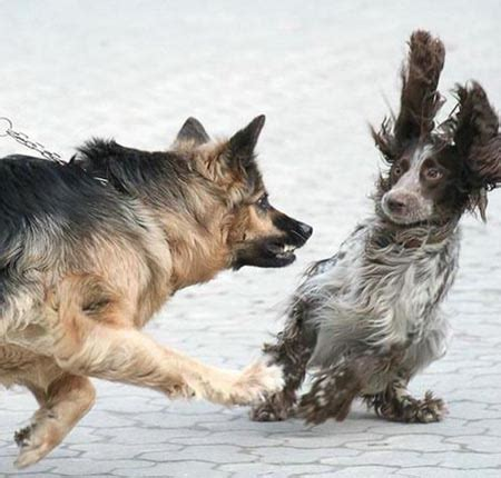 latest funny pictures funny dogs fighting