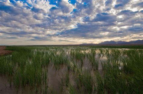 beautiful wetlands  visit  arizona