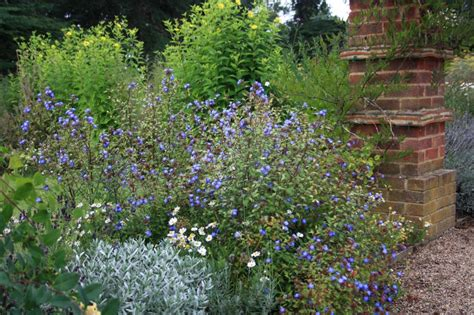 flowers to plant in late summer late summer flowering plants growing nicely