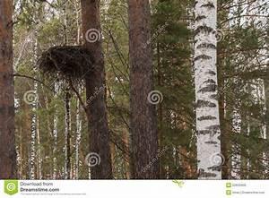 Achat Tronc Arbre Decoratif : for t de tronc d 39 arbre de nid photo stock image 52633400 ~ Zukunftsfamilie.com Idées de Décoration