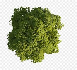 Tree, Aufsicht, Site, Plan, Floor, Plan, -, Look, Png, Download, -, 2813, 2531