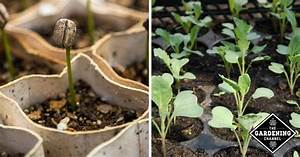 What Season Fruits And Vegetables Chart Beginning Gardener 39 S Vegetable Seed Starting And Planting