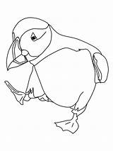 Puffin Coloring Dancing Printable Adults Puffins Pages sketch template
