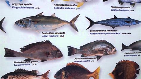 uae fishes waters
