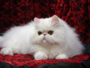 cat hair remove cat dog hair carpet clothing furniture