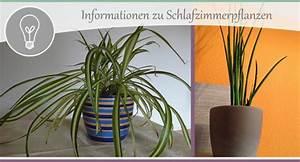 Pflanzen Im Schlafzimmer : schlafzimmer gestalten teil 5 tipps zu pflanzen wohncore ~ Indierocktalk.com Haus und Dekorationen