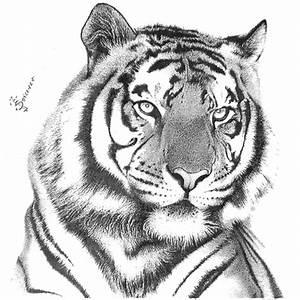 Diabolical Sketch Tiger Image Of Simple Drawing - Litle Pups