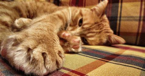 chat qui pisse sur le canape pourquoi mon chat me griffe ou me mord comprendre chat wamiz