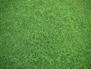 Grass Backgrounds Group (53+)