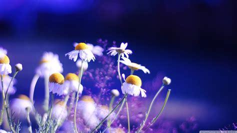 Desktop Hd Flower Wallpaper