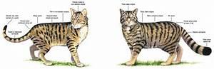 Scottish Wild Cats  U2013 Jeanne Foguth U0026 39 S Blog