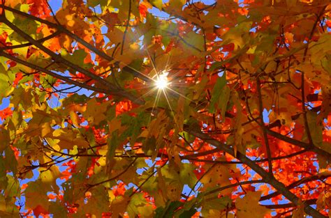 fall color fall colors not as vibrant or as in past years