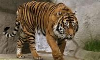 10 Hewan Langka yang Dilindungi di Indonesia