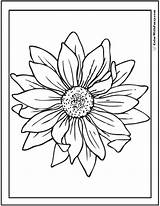 Sunflower Coloring Pages Drawing Tattoo Google Pdf Flower Template Sketch Garden Colors Colorwithfuzzy sketch template