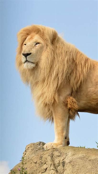 Lion Sky Rocks Wallpapers Animals 4k Desktop