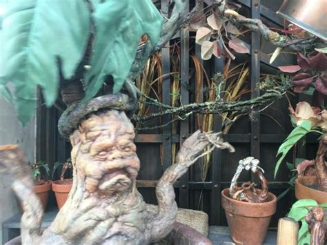 screaming plants harry potter harry potter world hogwarts picture of universal studios japan osaka tripadvisor