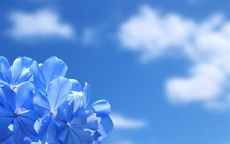 Blauwe Wallpapers