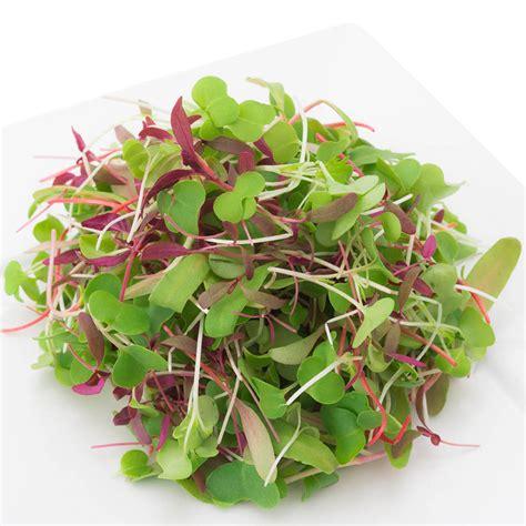 greens  grow certified organic microgreens  wheatgrass