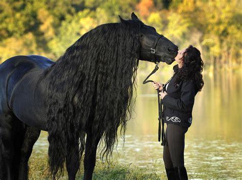Black Friesian Horse Rearing