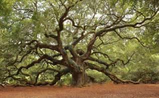 South Carolina Angel Oak Tree