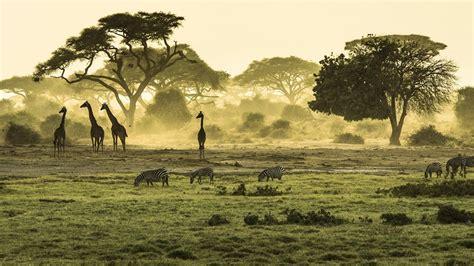 Safari in Oost-Afrika: Kenia en Tanzania - YouTube