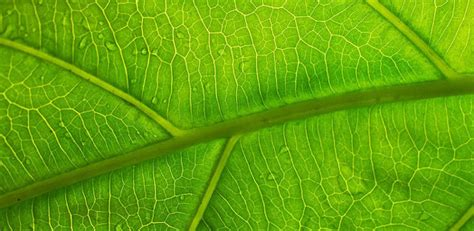 leaf vein structure  hold key  extending battery