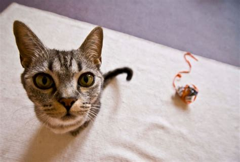 darmwuermer bei katzen zu behandeln