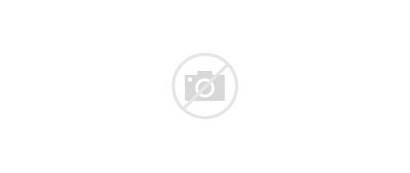 Flowers Bush Bloom Dual 1080p Wide
