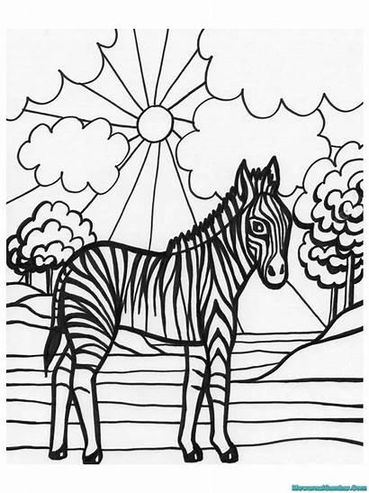 Coloring Printable Zebra Sheet Colouring Gambar Sheets