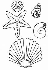 Coloring Beach Pages Shells Scorpion sketch template