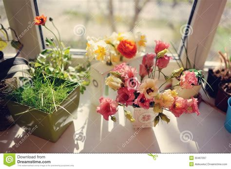 Flowers For Windowsill by Flowers On The Windowsill Stock Image Image Of Bouquet