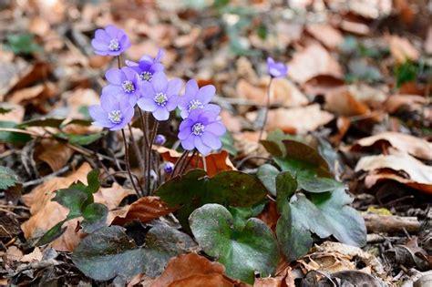 Pavasara Ziedi Ar Nosaukumiem - FOTO ~ IMAGES
