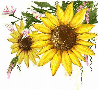 Sunflower Watercolor Clipart Sunflowers Mural Clip Transparent