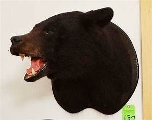 Black Bear head mount (black)