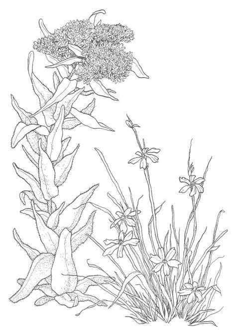 Free Coloring Pages Of Wildflowers Drawing