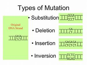 AIM: What causes genetic disorders. Do Now: What are ...