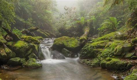 Walking in an ancient rainforest Australian Geographic