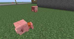 Farm Animals | dvirfixler